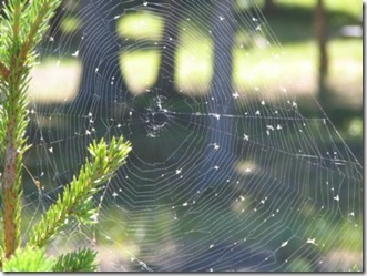 Dore Lake spiderweb small